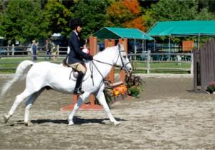 ridingschool-1